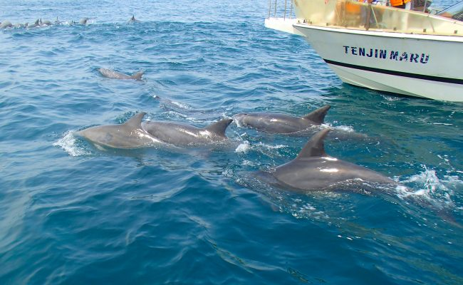 Shimabara Dolphin Watching Cruise